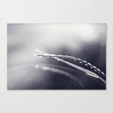 Evening Light in Black and White Canvas Print