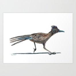 Watercolor Birds: Greater Roadrunner Art Print
