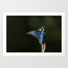 Preening Kingfisher Art Print