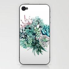 Cactus circle iPhone & iPod Skin