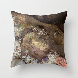 Rock Crab Throw Pillow