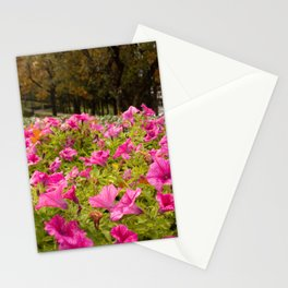 Petunia flowers hot pink original photography Stationery Cards