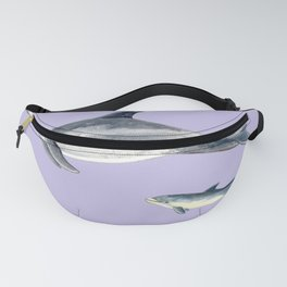 Bottlenose dolphin purple background Fanny Pack
