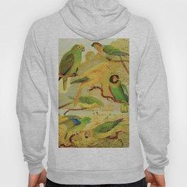 Amazonian Birds by Göldi & Emil August Belem Brazil Colorful Tropical Birds Scientific Illustration Hoody