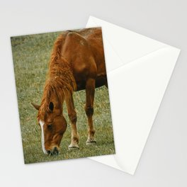Horse And Foal Stationery Cards
