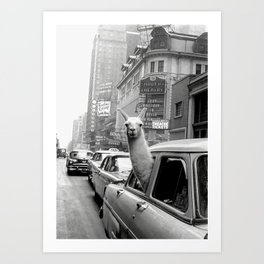 Llama Riding in Taxi, Black and White Vintage Print Art Print