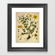 Botanical Print: Buttercup Framed Art Print