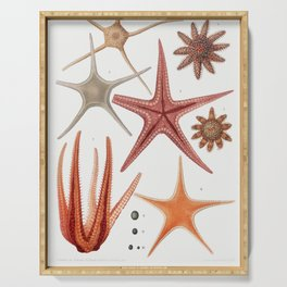 Starfish varieties set  from Resultats des Campagnes Scientifiques by Albert I Prince of Monaco (184 Serving Tray