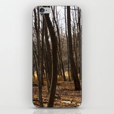 Forest Through the Trees iPhone & iPod Skin