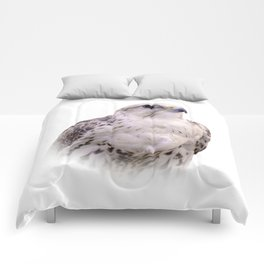 Up Close and Personal with a Stunning Saker Falcon Comforters