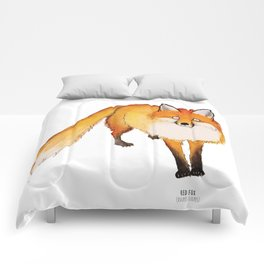 Red Fox (vulpes vulpes) Comforters