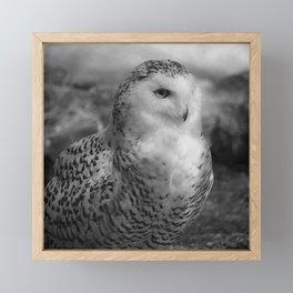 Snowy Owl - B & W Framed Mini Art Print