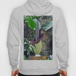Amorphophallus Titanum Hoody