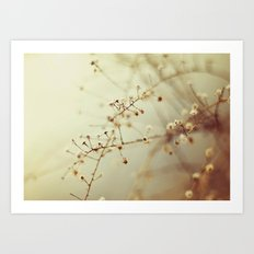 Winter Weeds Art Print