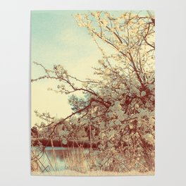 Hello Spring! (White Cherry Blossom by the Lake) Poster