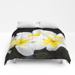 Plumeria obtusa Singapore White Comforters
