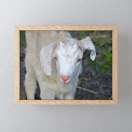 White Baby Goat Framed Mini Art Print