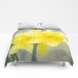 Four yellow narcissus flowers Comforters
