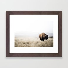 Bison stance Framed Art Print