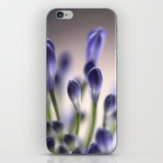 Agapanthus Buds iPhone & iPod Skin