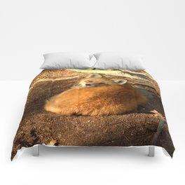Soaking up the setting sun Comforters