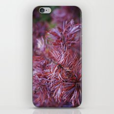 purple pine iPhone & iPod Skin