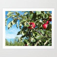 Apples to Apples Art Print