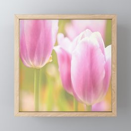 Spring is here with wonderful  colors - close-up of tulips flowers Framed Mini Art Print