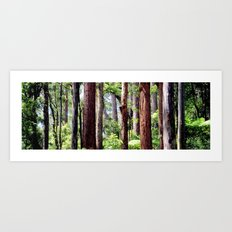 Australian Native Coastal Rainforest Art Print