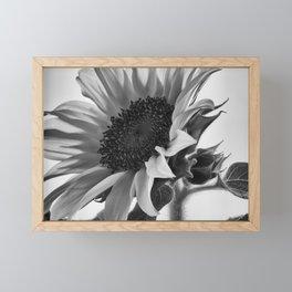 Sunflower Black & White Framed Mini Art Print