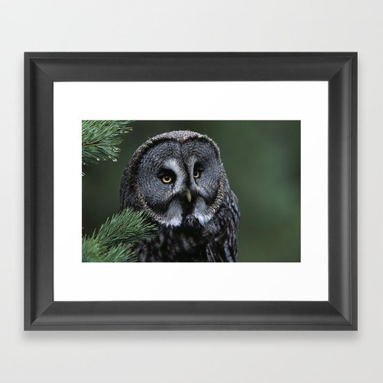 GREAT GREY OWL FACE Framed Art Print