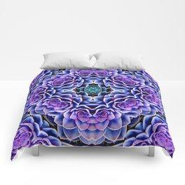 Echeveria Bliss Three Comforters