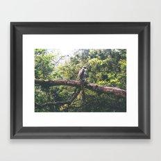 Sri Lankan Monkey Framed Art Print